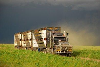 Truckies
