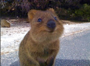 G'day Quokka!